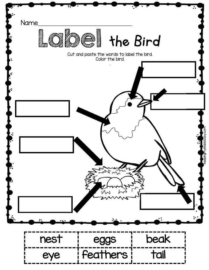 best 186 nz birds 2014 ideas on pinterest new zealand beautiful birds and birds online. Black Bedroom Furniture Sets. Home Design Ideas