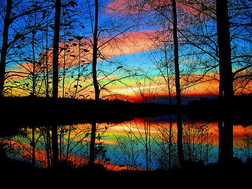 sunset in the forest...