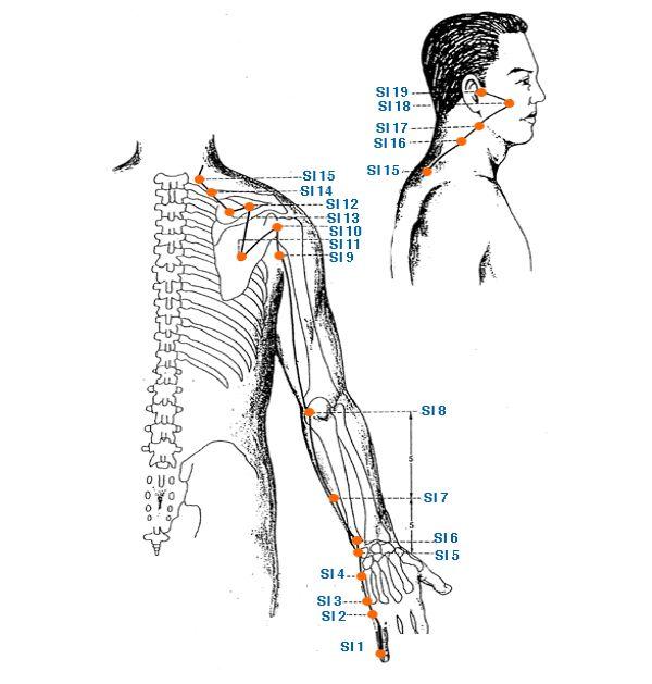 меридиан тонкой кишки - Triquetra Технологии Здоровья|Традиционная китайская медицина и цигун