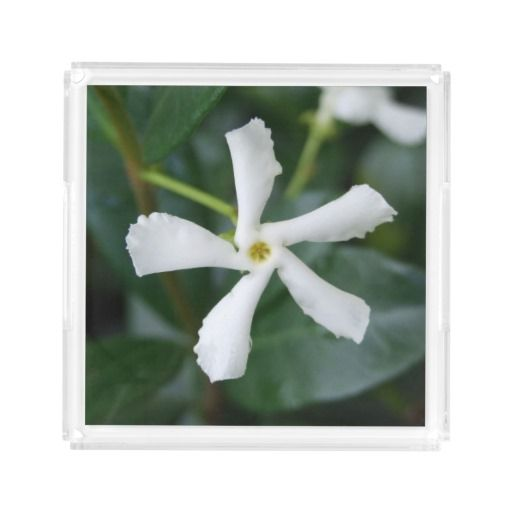Star Jasmine Acrylic Perfume Tray