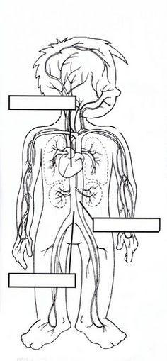 Resultado de imagen para el aparato digestivo para niños