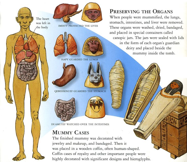 Canopic Jars  Organ Systems  And Their Respective Patron Deities  From  U201ctales Of The Dead