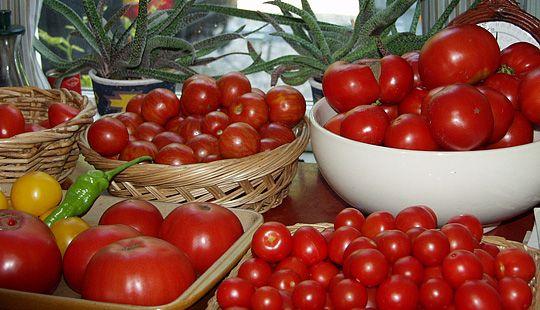 Henkogning af tomater