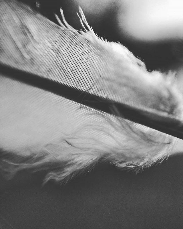 I need my wings ___ #photography #photo #nature #light #easymacro #macro #wing #feather #closeup #white #angel #blur #focus #macroshot #macro_captures #photooftheday #macrooftheday #seethrough #bokeh #urban #fly #icarus #icarusandthesun