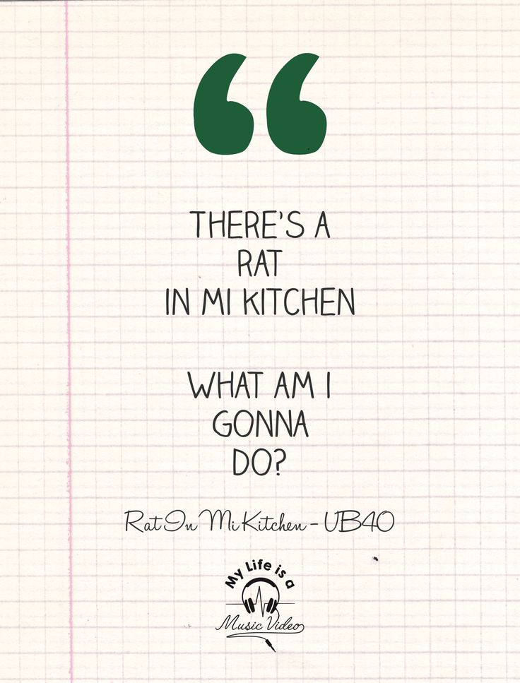 My worst nightmare ever! 🐀 😱 😱 😱 #rat #kitchen #UB40 #nightmare #fear #lyrics #lyriclovers #lyricquote #lyricquotes #Kitchen  #MyLifeisaMusicVideo #UB40Quote #Quotes #Quote #Song #Songs
