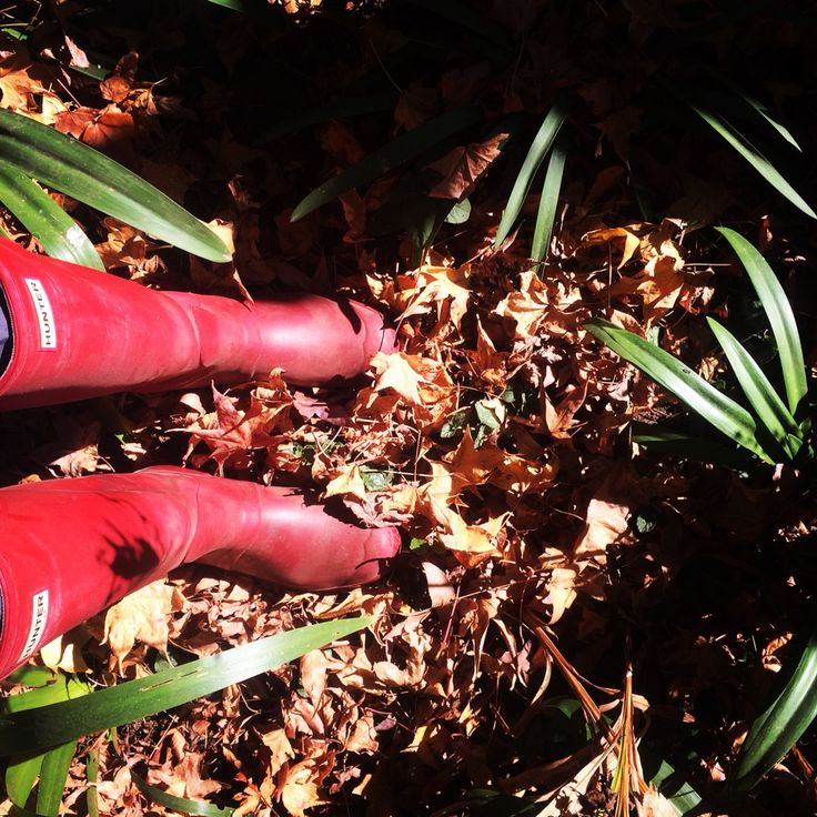 Autumn in red hunters