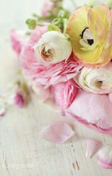 Flower #bloemen