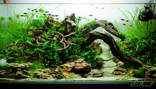 Great Tall, Thin Planted Tank. Very Natural And Very Amazing Look. | Tanked |  Pinterest | Aquariums, Natural And Plants