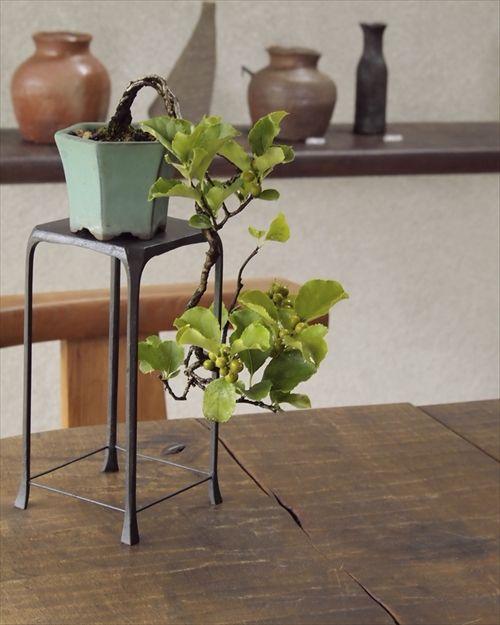 秋の実物盆栽! 秋の風情をお手元で小品盆栽・つるうめもどき化粧鉢仕立て