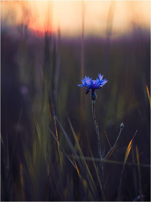 * by Elena  Khazina on 500px