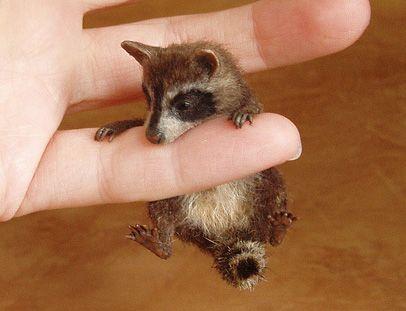 tiny raccoon