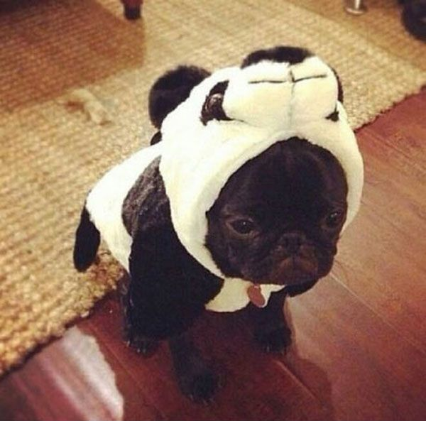 """Looks like someone's going to find """"panda"""" poop in their shoe."""
