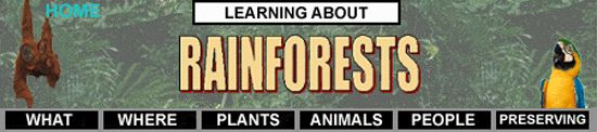Simple website that has some interesting rainforest facts.