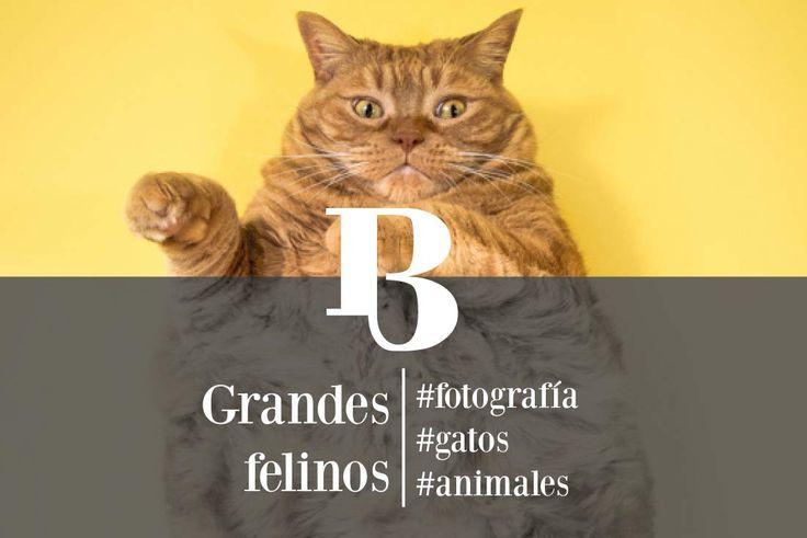 Bizarresia | Fat Cats, homenaje a los gatos gordos