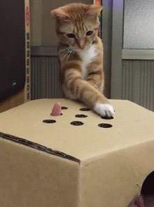 【GIF画像】猫のgifではこれが一番ということは決まったっぽいけど:キニ速