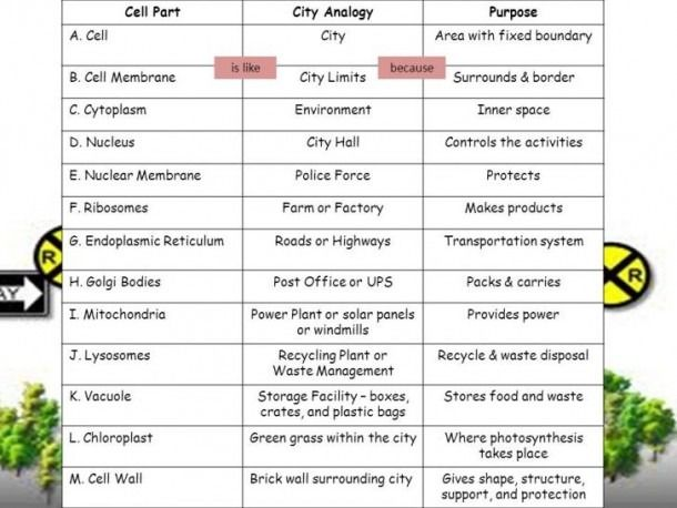 Cell City Worksheet Answers Cell City Cell City Project Cell Parts