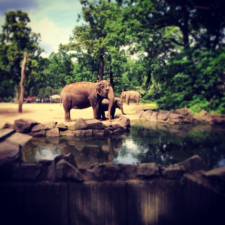 Берлин, зоопарк  Германия  Berlin Germany Deutschland  Zoo