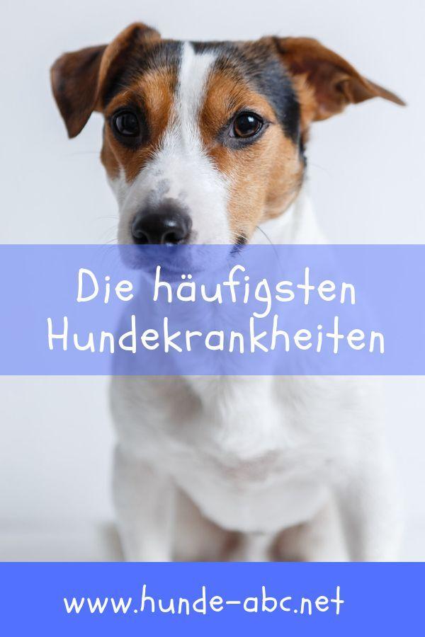 Die Haufigsten Hundekrankheiten Allgemeine Infos Hunde Krankheit Hundegesundheit