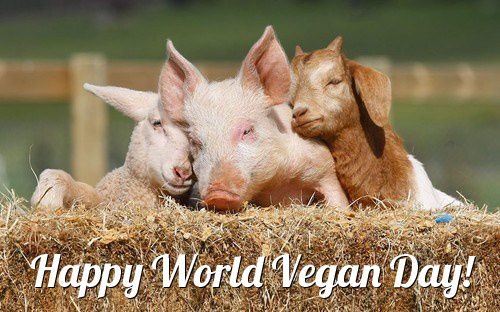 Happy World Vegan Day to all my fellow vegans! Thank you for making this a more peaceful and compassionate world for all beings!
