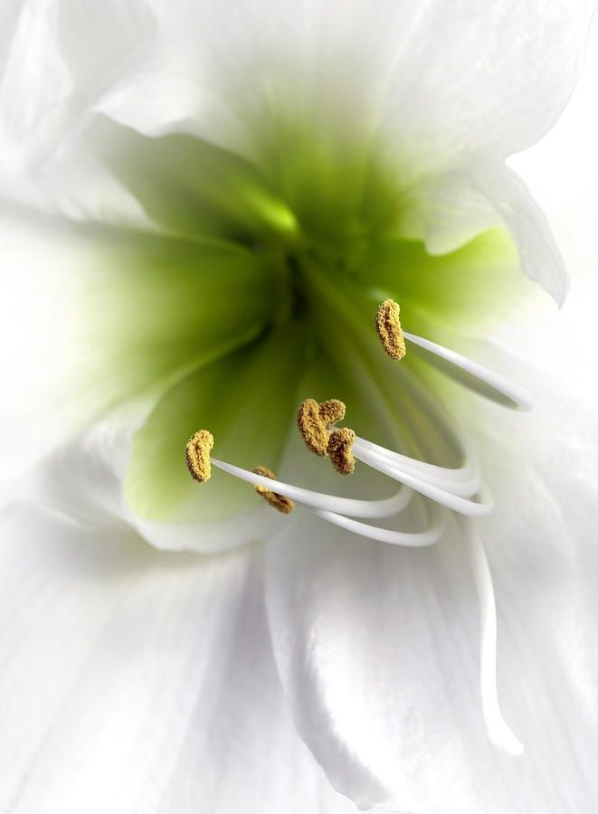 """Amaryllis. You no long can affect me with your behavior.. Epiphany about the quote """"Letting go"""". I see the beauty in this."""