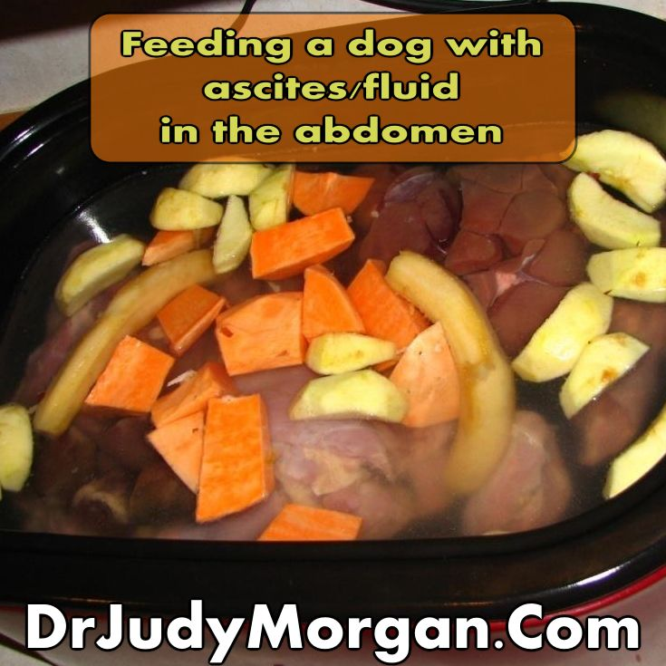 Best Food To Feed A Cat With Liver Disease