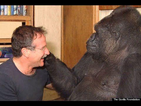 Rrobin Williams And Koko The Gorilla Video
