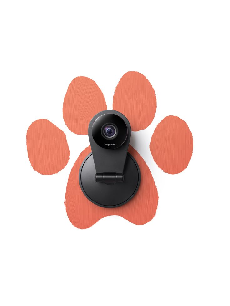 Live stream from anywhere to catch them right in their paw prints with Dropcam.