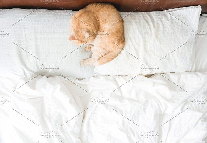 Cat sleeping on bed by The baking man on @creativemarket