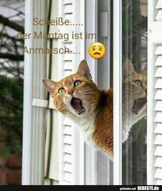 Scheisse Der Montag Ist Im Anmarsch Lustige Bilder Spruche Witze Echt Lustig Niedliche Katzchen Susseste Haustiere Schonen Katzen