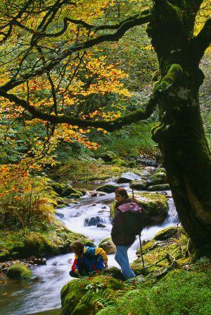 Bosques de otoño