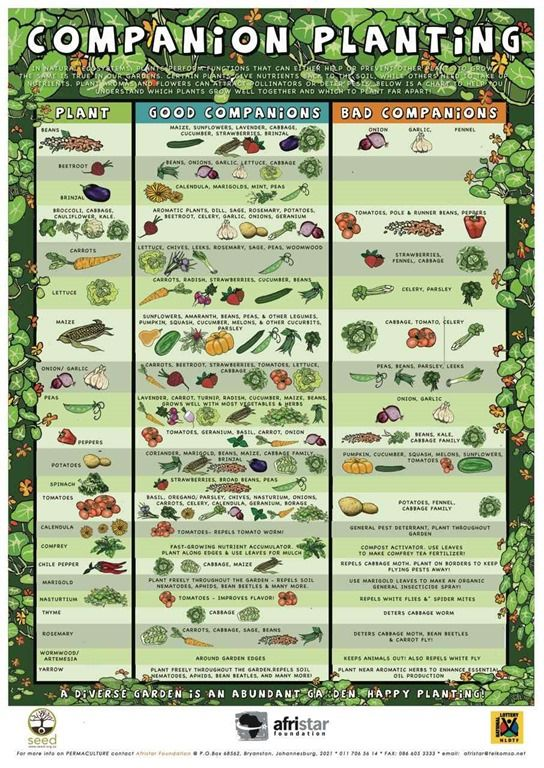 Companion Planting Resources for Gardening Donna Chaffee