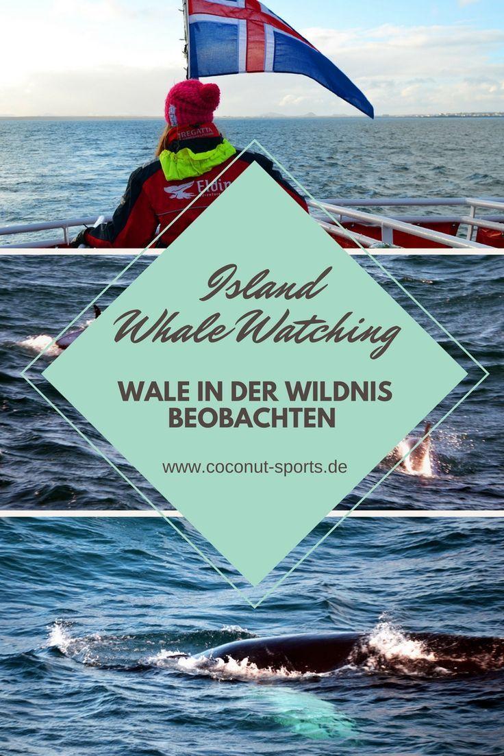 Wale Beobachten In Island Auf Whalewatch Tour Mit Elding Wale Beobachten Island Reise Reisen