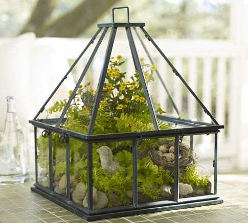 Woven Home: How to make a terrarium: Tabletop Greenhouses, New Home, Potterybarn, Minis Gardens, Little Gardens, Terrarium, Carnivorous Plants, Pottery Barns, Glasses Houses