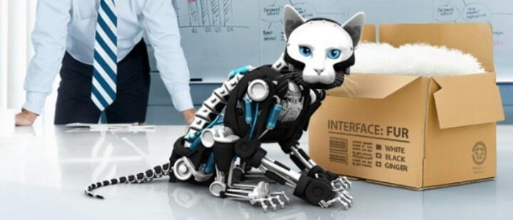 Cyber Robot Cat Future Futuristic Animal Kingdom