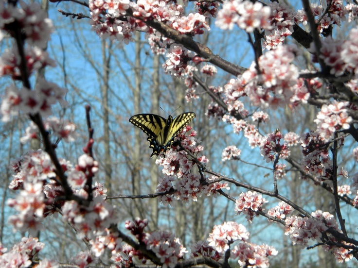 Image result for blossom surfs the breeze sun shifts shadows in branches silent butterfly
