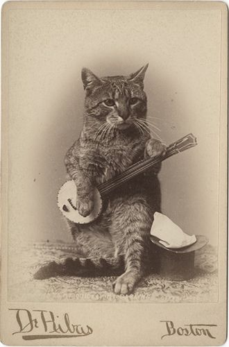 """cabinet card of a cat """"playing"""" a banjo, date unknown."""