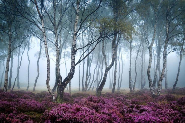 Stanton Moor in Northern England - Stunning!!!!