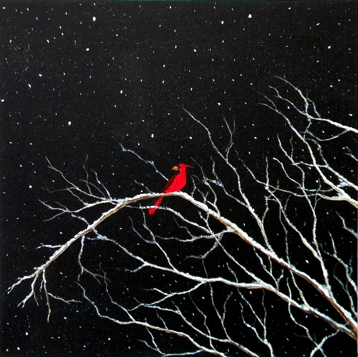 Cardinal in Snow by blablover5 on deviantART