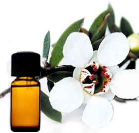Manuka olie heeft veel eigenschappen met Tea Tree etherische olie gemeen, is sterk antiseptisch maar milder in gebuik. De olie wordt daarom ook wel de Nieuw-Zeelandse Tea Tree genoemd.