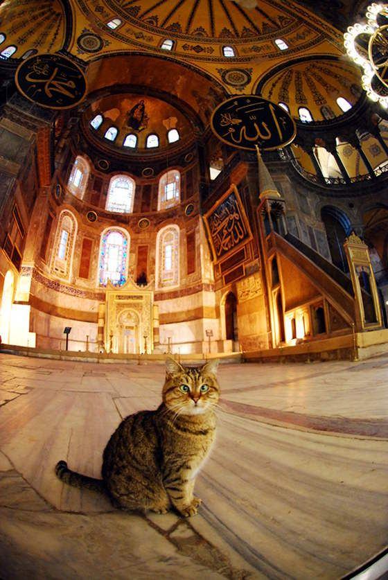 Another photo of Gli the devout cat at museum Hagia Sophia in Turkey.  He is 7 yrs. old and a little cross-eyed. He's been at the museum since he was a kitten.