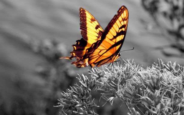 Νίκος καζαντζάκης: το μάθημα της πεταλούδας