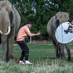 "German rapper ""Liquit Walker"" seen filming a music video with elephants"