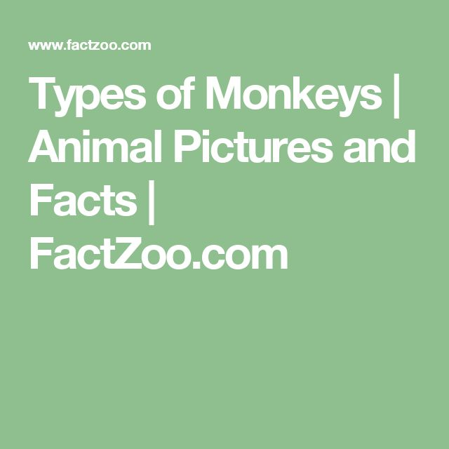 Types of Monkeys | Animal Pictures and Facts | FactZoo.com