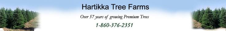 Hartikka's Tree Farms - Christmas Trees - Cut Trees - Transplants