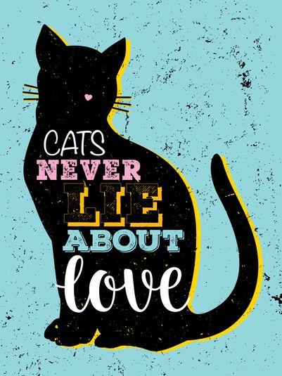 Amor gato casa animal bicho azul