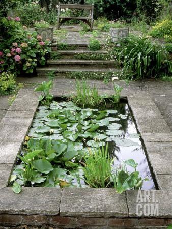 460 best bassin d eau pond images on pinterest backyard for California fish planting