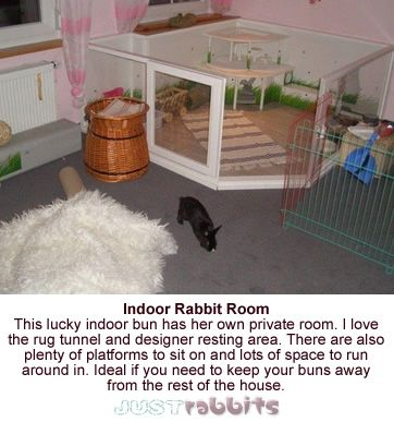 Some house rabbit owners are now offering their pet rabbits a room of their own inside their home, and these lucky rabbits get all the luxury, care and exercise they need - good for them!