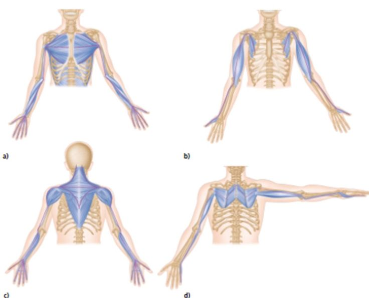 To truly understand fascia recoil, you must first understand the fascia system. Fascia is the soft tissue that holds us together and it has more nerve activity than muscle! Fascia permeates the entire body and literally connects to every structure, from head to toe, hand-to-hand, inside to out. An example of structural fascia is the membrane you see on the inside of chicken skin.