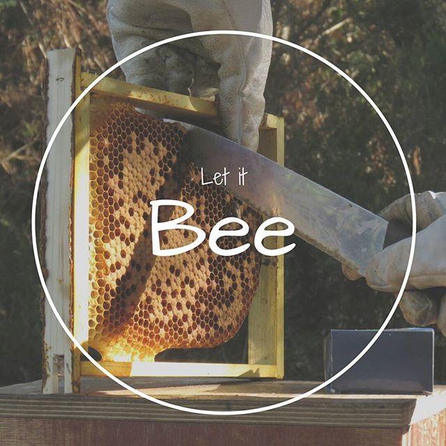 #apiculturaeficiente  #abelhas  #bees #beekeeping #apicultura #apiculturanatural  #Regram via @apicosta