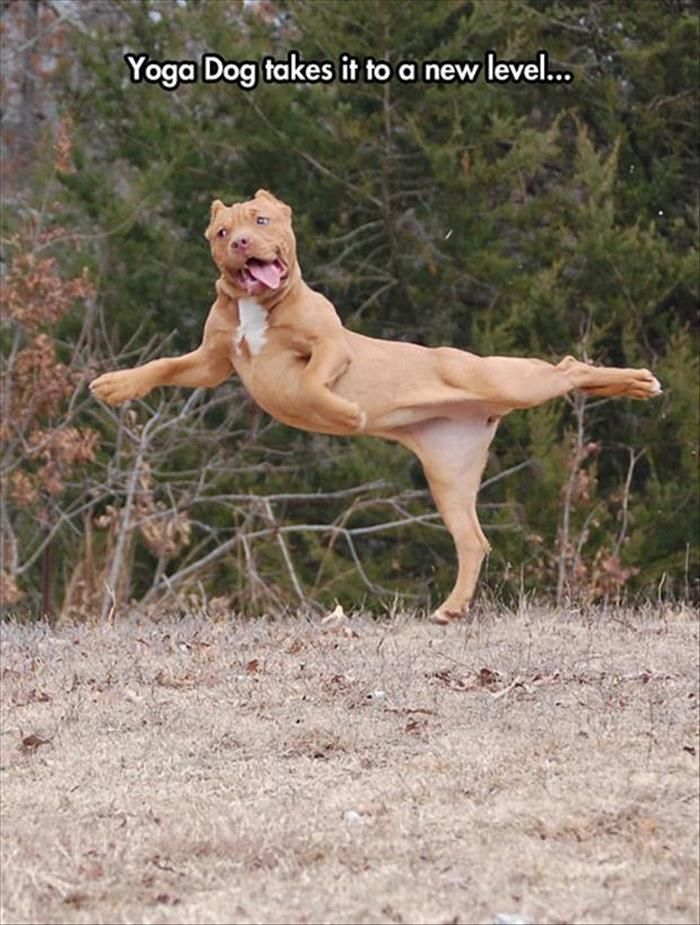 Image result for site: pinterest.com weird dog